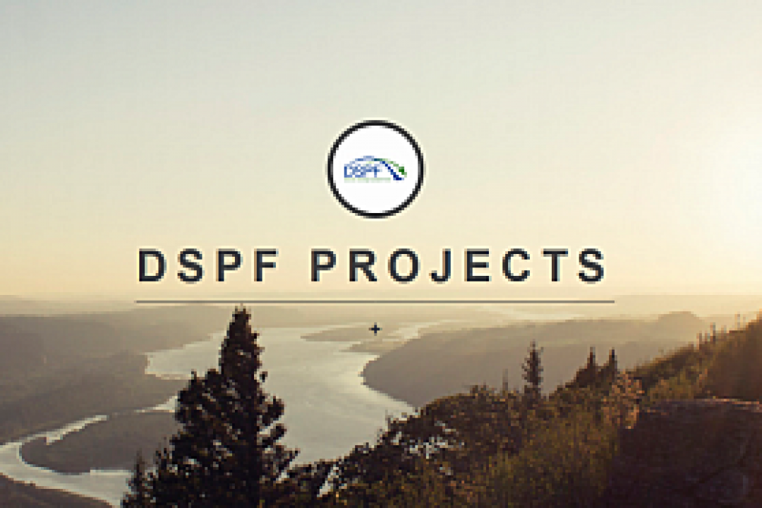 DSPF blog on tumblr